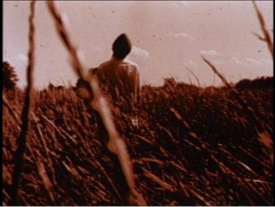 Fall, Deirdre Logue, LUX Film Farm